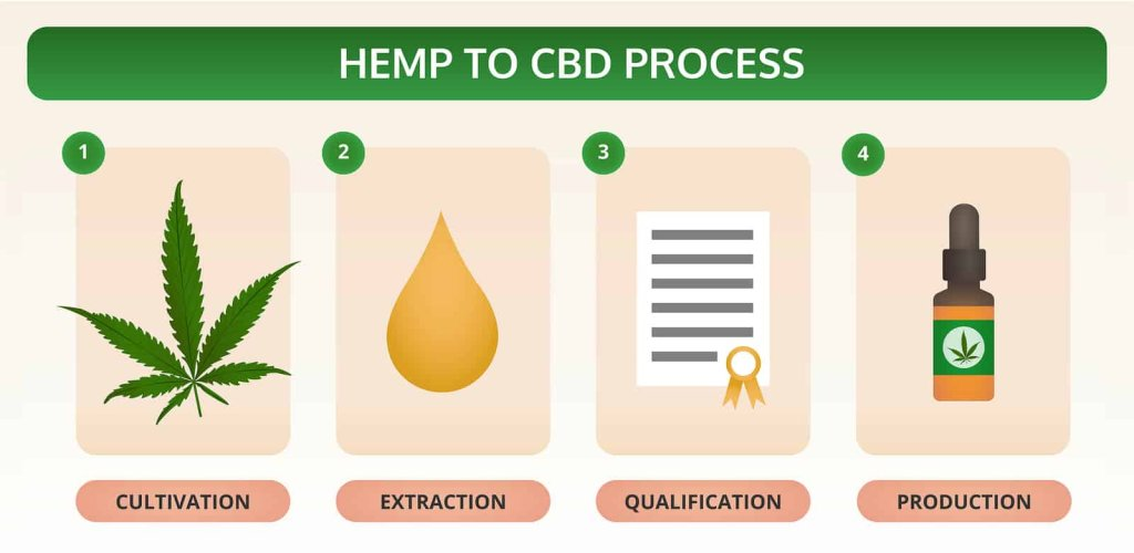 Hemp To Cbd Process Horizontal Textbook Infographic Illustration