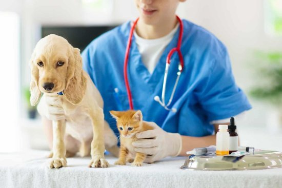 a vet and cat and dog