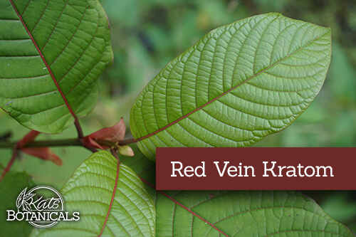 Red Vein Kratom Leaf